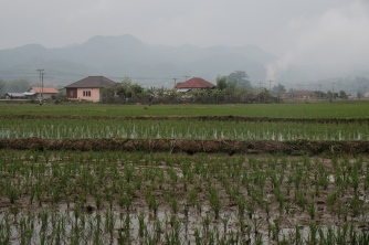 The rice paddy where we slept.